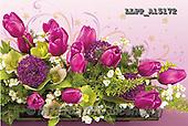 Maira, FLOWERS, BLUMEN, FLORES, photos+++++,LLPPA15172,#F#