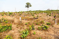 Cleared forest in the Phnom Tnout Phnom Pok Wildlife Sanctuary, in northern Cambodia. Clearance of forests for agriculture is one of the biggest threat facing Cambodia's last remaining forests.