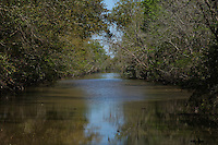 Canal leading to swamp in the Barataria Preserve.
