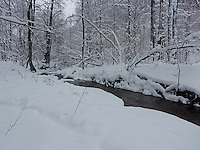 FOREST_LOCATION_90179
