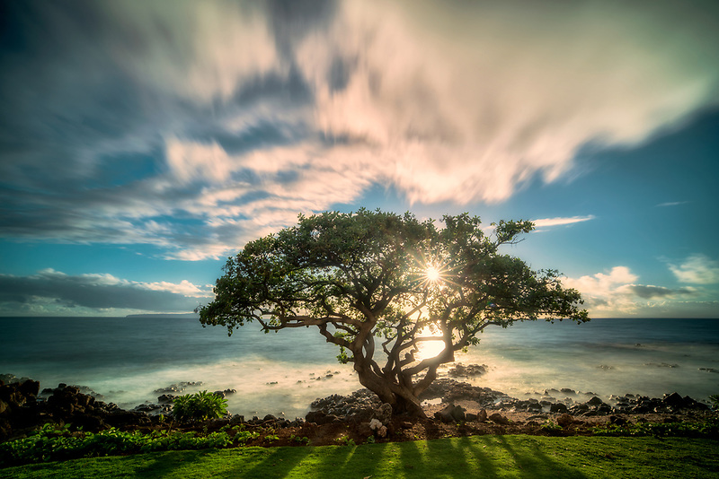 Sunset and tree. Wailea. Maui, Hawaii