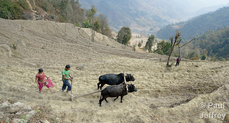 In the mountain village of Marpak, in Nepal's Dhading District, farmers plow and seed their terraced fields as the rainy season approaches.