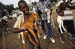 TOWNSHIP LIFE, Ivory Coast. Muslims with goats. Yopougon, near Abidjan. West Africa. A huge sprawling township across the lagoon from the capital. It has a population of over a million. Yopougon has been the site of numerous massacres, a flash point, problems between Muslims and Christians. Residents are often poor and living in shanties.