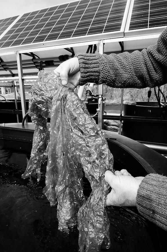 Nederland, 't Horntje, Texel, 12 april 2014<br /> Nioz, Koninklijk Nederlands Instituur voor Onderzoek der Zee.<br /> Algenkwekerij bij het Nioz met Klaas Timmermans, de wetenschapper die het zeewiercentrum leidt.<br /> Foto (c) Michiel Wijnbergh