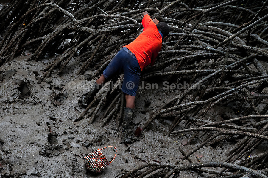 Stiven, the 13-years-old Colombian boy, picks up a shellfish from the mud in the mangrove swamps on the Pacific coast, Colombia, 12 June 2010. Deep in the impenetrable labyrinth of mangrove swamps on the Pacific seashore, hundreds of people struggle everyday, searching and gathering a tiny shellfish called 'piangua'. Wading through sticky mud among the mangrove tree roots, facing the clouds of mosquitos, they pick up mussels hidden deep in mud, no matter of unbearable tropical heat or strong rain. Although the shellfish pickers, mostly Afro-Colombians displaced by the Colombian armed conflict, take a high risk (malaria, poisonous bites,...), their salary is very low and keeps them living in extreme poverty.