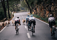 unexpected obstruction on the last descent for the race leaders<br /> <br /> Trofeo Lloseta - Andratx: 140km<br /> 27th Challenge Ciclista Mallorca