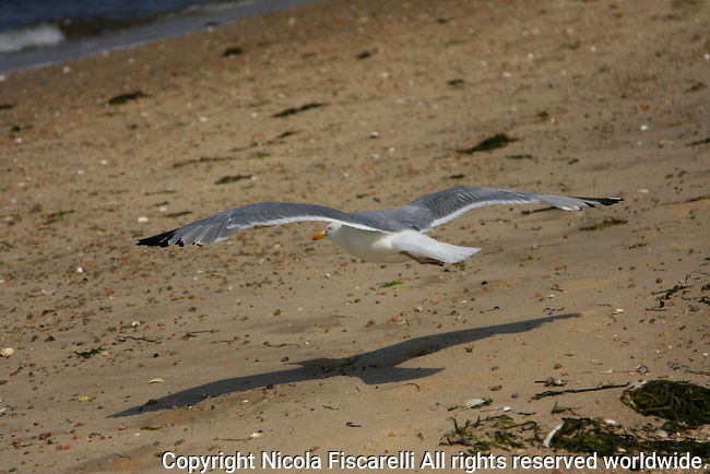 A shadow of a flying seagull on the Provincetown  beach of Cape Cod Massachusetts.