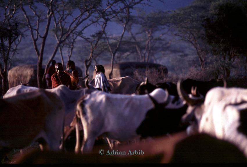 A Maasai moran  early morning  sunrise.<br /> A moran manyatta, Kajiado, Kenya.