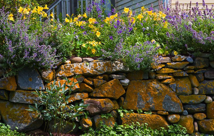 Flowers on a Stone Wall in Monhegan Island, Maine.
