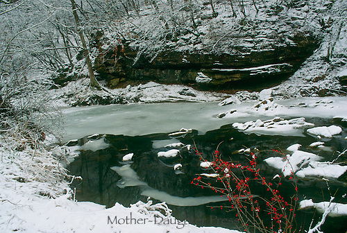 late afternoon frozen creek and snow with bright red Ilex berries