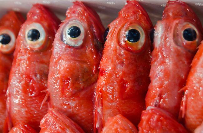 Bright eyes of red fish at Tsukiji Fish Market Tokyo Japan