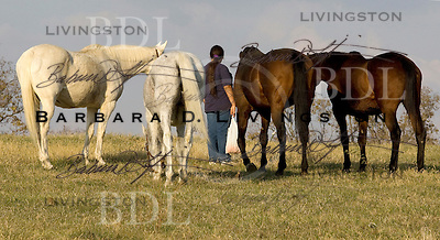 Our Mims Retirement Haven (Jeanne Mirabito) scenic, mood, horse racing, pretty, racehorse, horse, equine, racetrack, track, saratoga