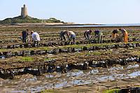 France, Normandie, Manche (50), Cotentin, Saint-Vaast-La-Hougue, conchlyliculture // France, Normandy, Manche, Cotentin, Saint Vaast La Hougue