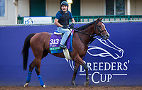 DEL MAR, CA - NOVEMBER 02: Oscar Performance, owned by Amerman Racing, LLC and trained by Brian A. Lynch, exercises in preparation for Longines Breeders' Cup Turf at Del Mar Thoroughbred Club on November 2, 2017 in Del Mar, California. (Photo by Kazushi Ishida/Eclipse Sportswire/Breeders Cup)