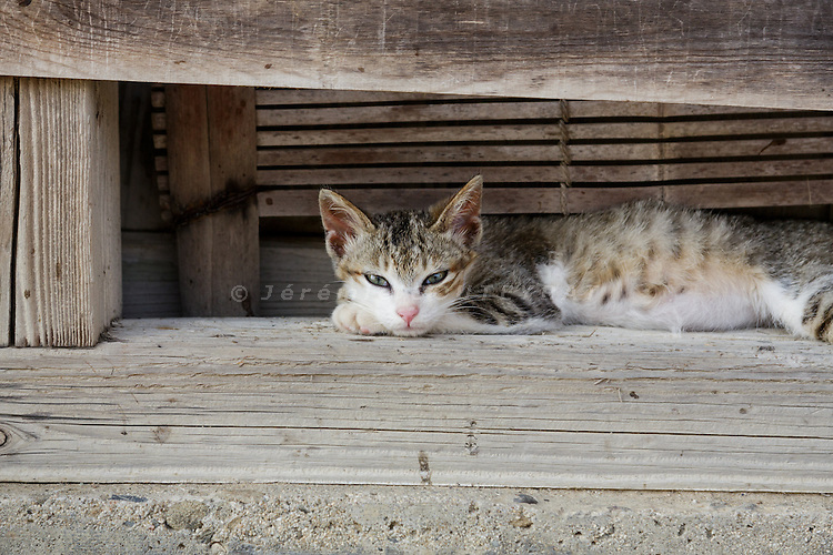 Aoshima, Ehime prefecture, September 4 2015 - Cat lazing in the afternoon.<br /> Aoshima (Ao island) is one of the several &laquo; cat islands &raquo; in Japan. Due to the decreasing of its poluation, the island now host about 6 times more cats than residents.
