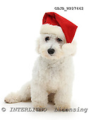 Kim, CHRISTMAS ANIMALS, photos, GBJBWP27442,#XA# stickers