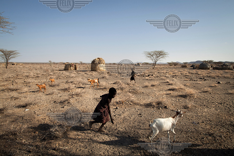 A child chases goats in the village of Narukopo on the shores of Lake Turkana.