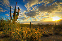 As Arizona celebrates it's 100th Birthday as a state the sun sets on the Sonoran Desert