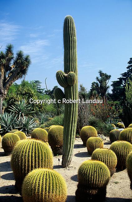 Cactus Garden Huntington Gardens, Pasadena, CA