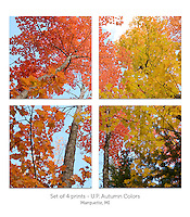 Display a print in a different way with this 4-image photo split of colorful autumn trees. Marquette, MI