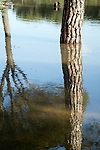 Pine trees reflected on a pool, Spain