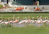 Hialeah Park, racetrack, horse racing, Quarter Horse racing, Citation, Miami, flamingos, John Brunetti, racehorse