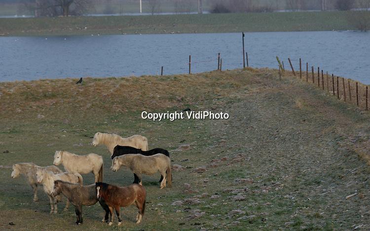 Foto: VidiPhoto..DRIEL - Als de gevoelstemperatuur door een koude wind flink beneden het vriespunt komt, dan is er maar één oplossing: met de kont in de wind en dicht bij elkaar kruipen. Deze paarden in de uiterwaarden bij het Betuwse Driel kennen het klappen van de zweep.