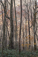 Hardwood Forest, Great Smoky Mountains National Park