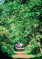 Family of four walking down a wooded park trail, families, togetherness. Family. California U.S.A. wooded park.