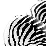Black and white nautilus shell photography