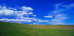 Zumwalt Prairie Preserve, OR: Cumulus clouds building over an open native bunchgrass prairie on Monument Ridge - A Nature Conservancy Preserve