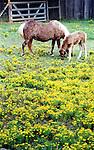 corinth, texas