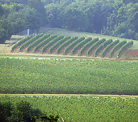 Pollak vineyards in Crozet, Va. Credit Image: © Andrew Shurtleff