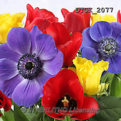 Gisela, FLOWERS, BLUMEN, FLORES, photos+++++,DTGK2077,#f#