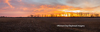 63893-02808 Sunrise over field,  Marion County, IL