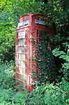 Overgrown rural red traditional phone box, Hoo, Suffolk, England, UK