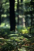 Europe/France/Normandie/Basse-Normandie/61/Orne/Env de la Poterie : Forêt