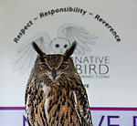 Native Bird Connections, of Orinda, brought a Eurasian Eagle Owl to the Live Bird Show at Ironhouse Sanitary District in Oakley, California on Saturday, April 12, 2014.  The bird show was part of the Oakley Science Week.  Photo/Victoria Sheridan