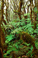 The lush green rainforest at Kamakou preserve on Molokai, managed by The Nature Conservancy, is the home for many native Hawaiian plant and animal species.
