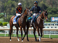 ARCADIA, CA APRIL 8:  #3 Paradise Woods ridden by Flavien Prat in the post parade of the Santa Anita Oaks (Grade 1) on April 8, 2017 at Santa Anita Park in Arcadia, CA (Photo by Casey Phillips/Eclipse Sportswire/Getty Images)
