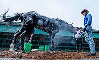 BALTIMORE, MD - MAY 15: Bravazo gets a bath as exercise rider Yony Hernandez holds him after galloping during Preakness Week at Pimlico Race Course on May 15, 2018 in Baltimore, Maryland (Photo by Scott Serio/Eclipse Sportswire/Getty Images)