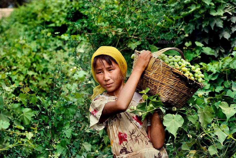 1995..A young Uighur girl carries an osier basket full of grapes during the harvest in the valley of Turpan...Une jeune fille ouighoure porte un panier en osier rempli de grappes de raisins pendant la rE.colte dans la vallE.e de Turpan.