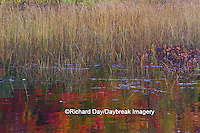64776-01510 Pond and fall color reflection Alger County Upper Peninsula Michigan