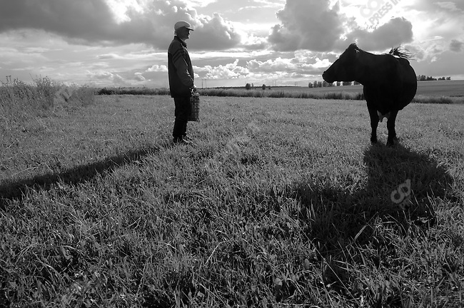 A man grazed his cow, which he claimed gave him 18 litres of milk per day, some of which he kept and some of which he sold to neighbours, near the town of Efremov, Tula region. Russia, July 30, 2008.