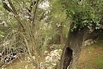 Israel, Ein Boker in Jerusalem mountains