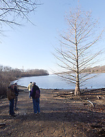 Eagle Watch Nature Trail is one of the few places in Northwest Arkansas where people can see a bald cypress tree. The tree (right) was 3 feet tall when it was planted near Swepco Lake in 2002.<br />