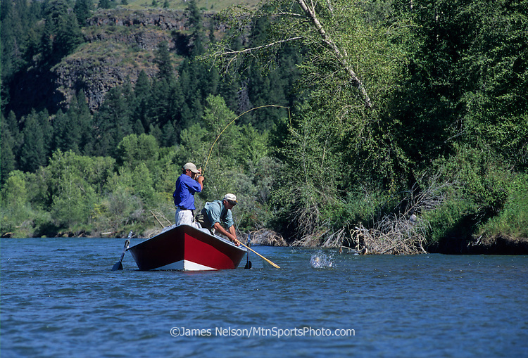 081079-D. An angler in a drift boat brings a trout to the net on the South Fork of the Snake River in Idaho.