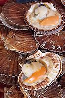 Europe/France/Normandie/Basse-Normandie/14/Calvados/Trouville: Coquilles Saint-Jacques au marché aux poissons
