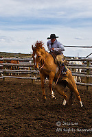 Cowboys working and playing. Cowboy Cowboy Photo Cowboy, Cowboy and Cowgirl photographs of western ranches working with horses and cattle by western cowboy photographer Jess Lee. Photographing ranches big and small in Wyoming,Montana,Idaho,Oregon,Colorado,Nevada,Arizona,Utah,New Mexico. Cowboys and cowgirls living the western lifestyle.