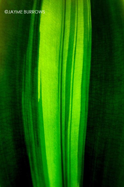 Close-up of a leaf.